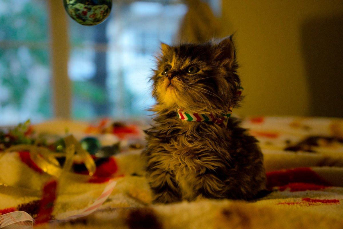 My friend in Atlanta is fostering kittens. They did a holiday photoshoot. Plz enjoy: https://t.co/jLUYkof93A https://t.co/Tzpet3VSgF