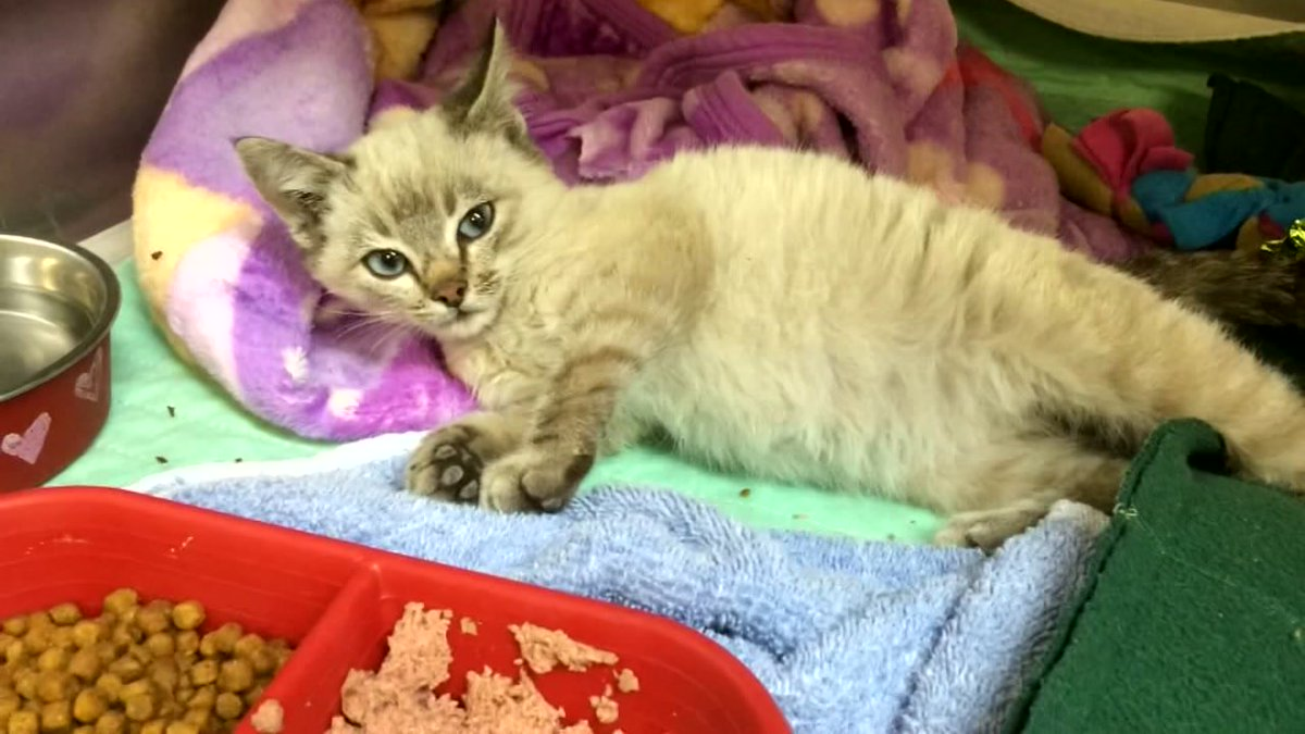 Kitten survives being shrink-wrapped, shipped 500 miles