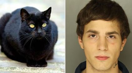 Black cat rats out suspect: Cat's intense stare leads police to suspect hiding in shed