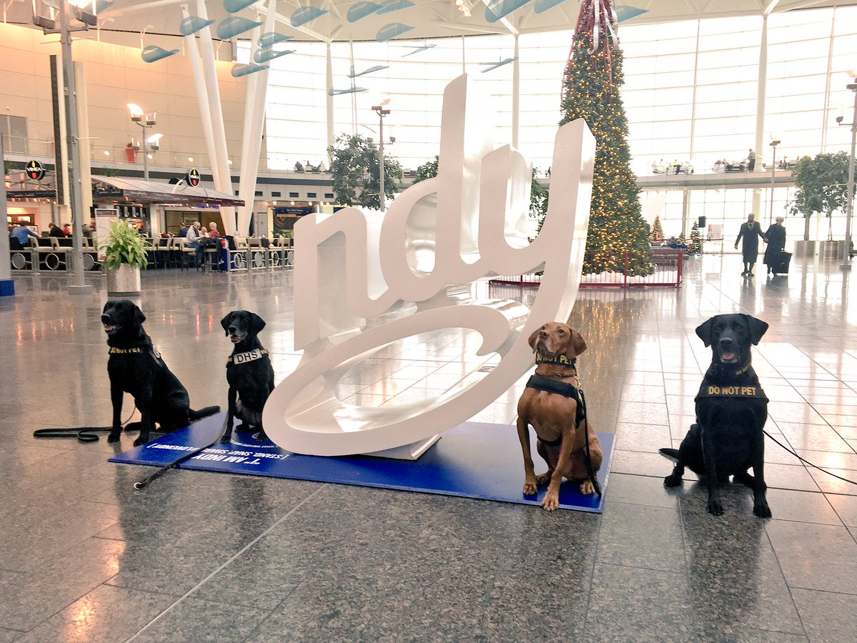 IND @TSA K9s are pawsitively ready for the holidays!  LoveIndy