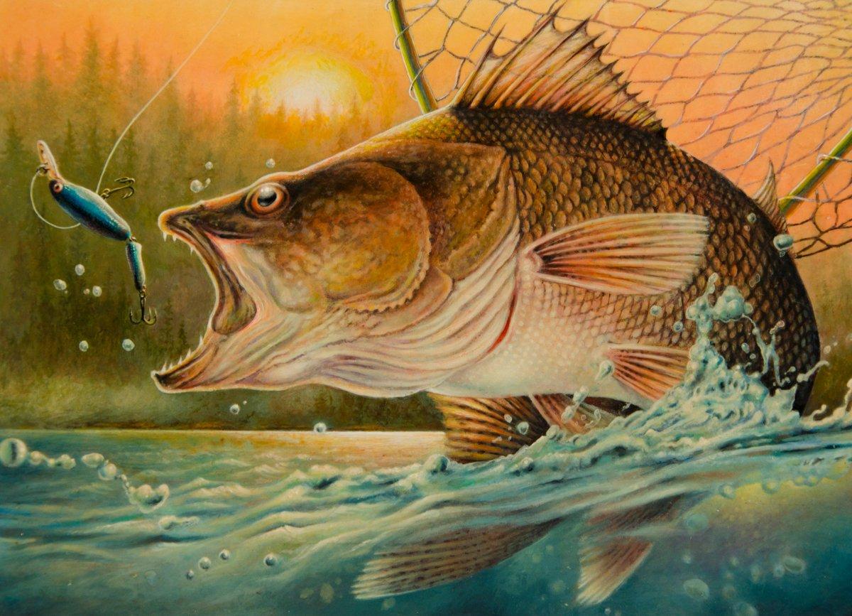 Minnesota fishing mn fish twitter for Fishing in minnesota