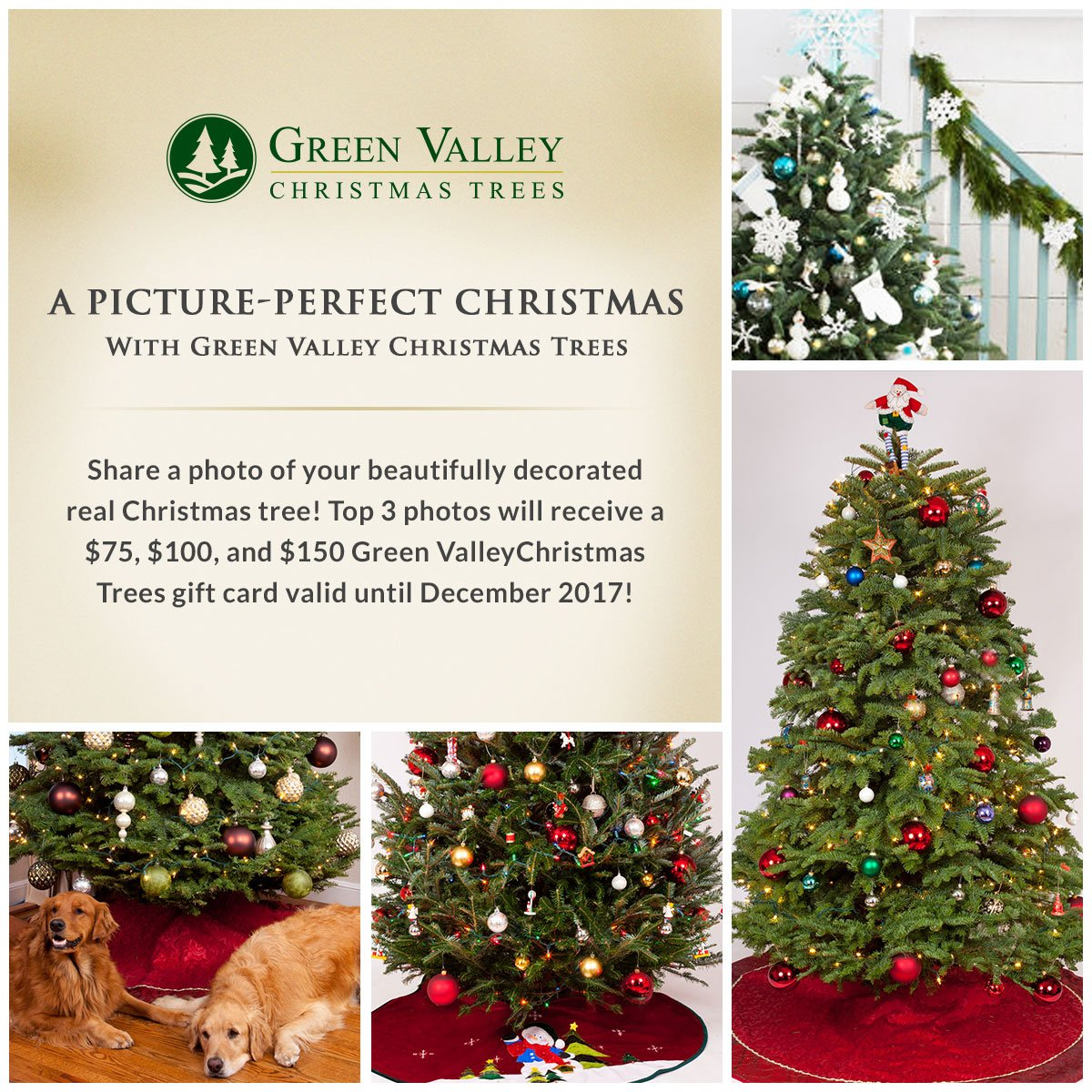green valley trees on twitter submit a photo of your beautiful real christmas tree and win a greenvalleytree gift card ichoosegreenvalley