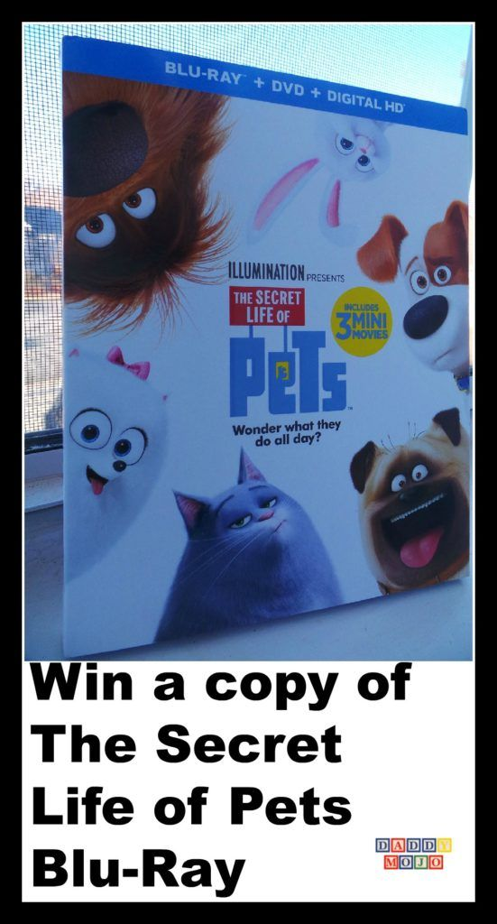Win a copy of The Secret Life of Pets Blu-Ray from @DaddyMojo- https://t.co/uGlNxBbA04 @PetsMovie, #Giveaways,#Pets https://t.co/bXk3SLkjpp