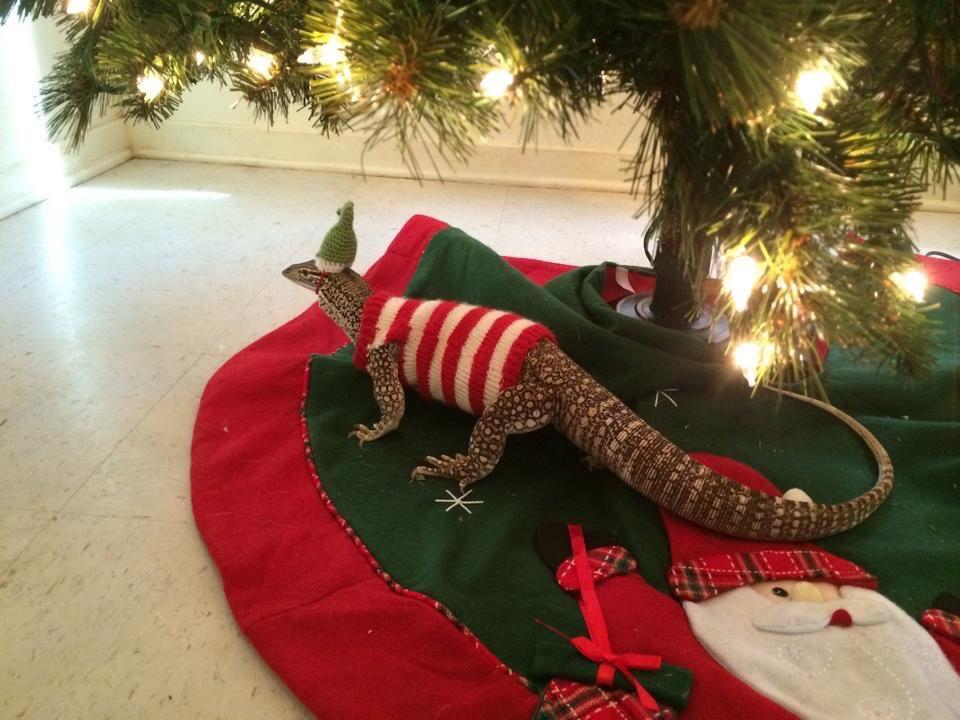 Dog Christmas Tree Meme.Meme Olympics On Twitter My Dog Can T Wait For Christmas