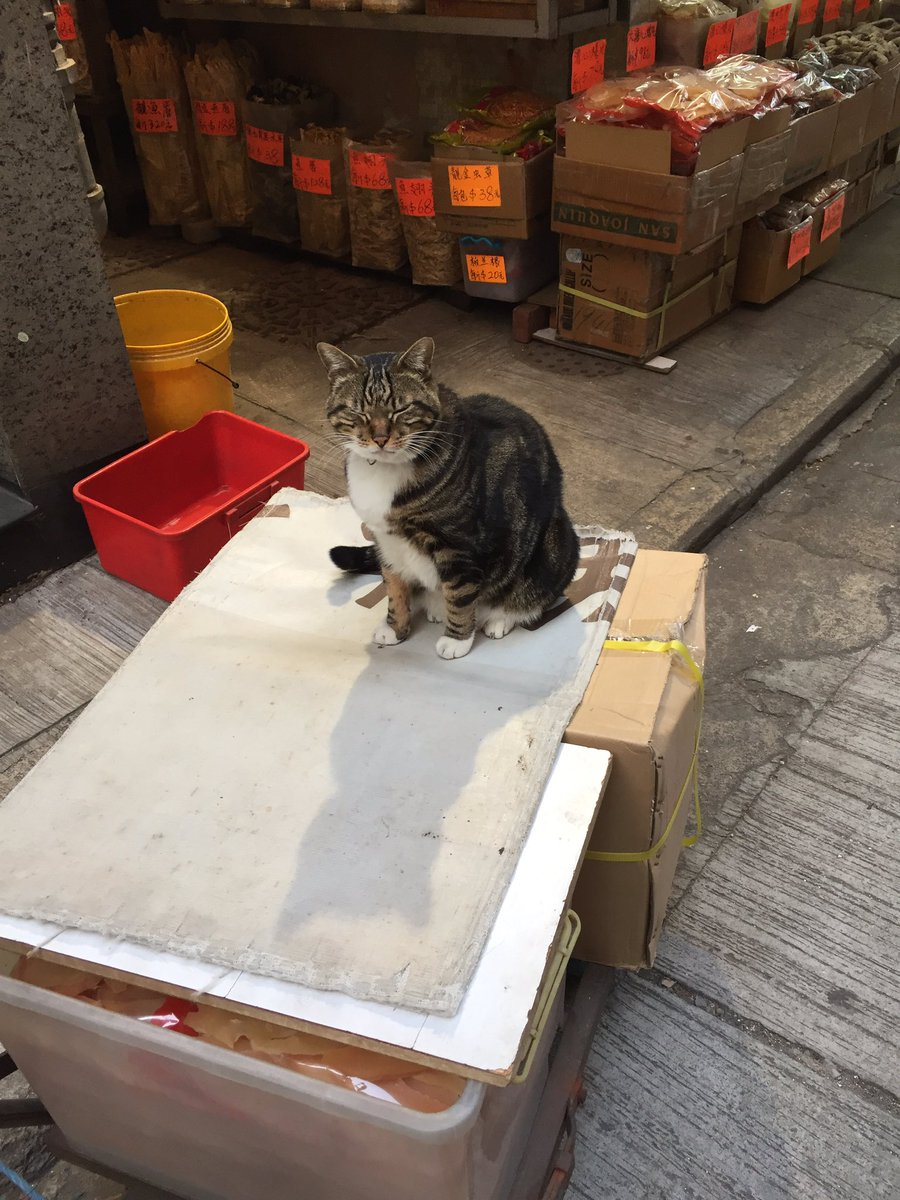 """Btw, Hong Kong has their own version of bodega cats. Naturally I took a picture and the cat was all """"Ugh. Whatever."""" https://t.co/IsFUNV0zqy"""