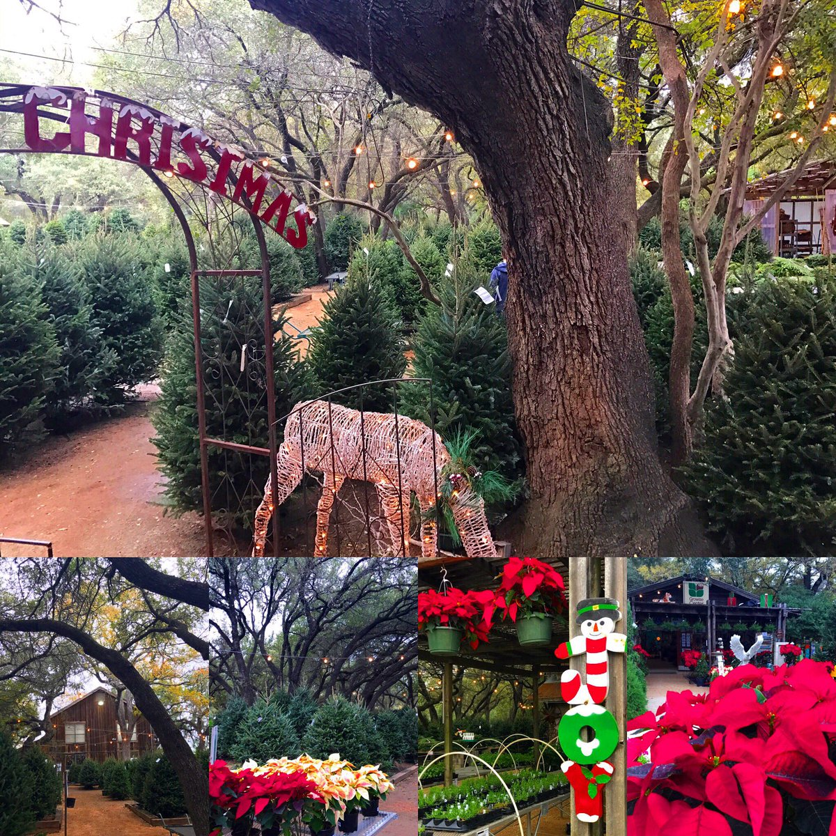 So still haven't found the right mini-tree...YET, look at this magical Christmas place I discovered! @KABBFOX29
