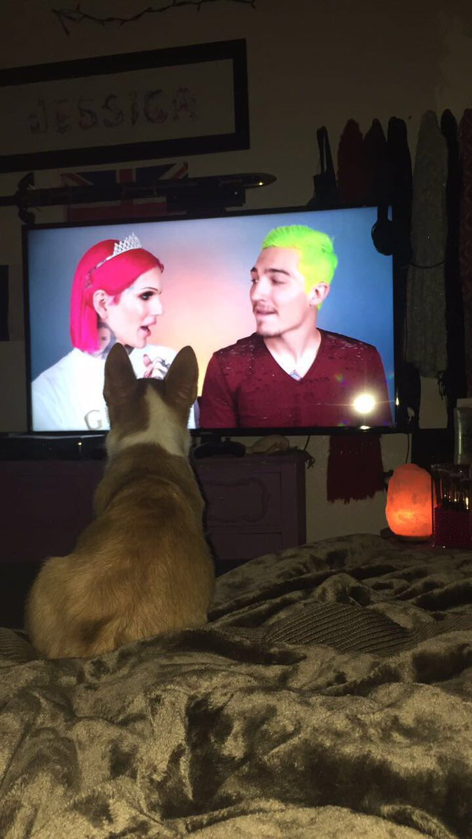 When your corgi watches @JeffreeStar with you