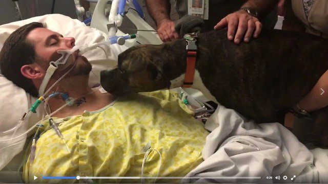 Dog says goodbye to her human in heart-wrenching video