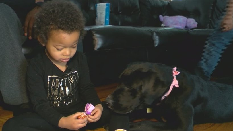 Girl with leukemia now has a four-legged friend