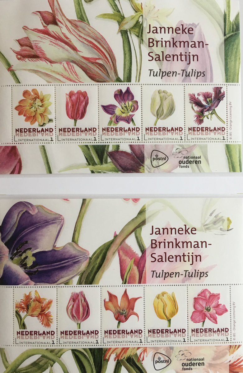Tulips in holland on twitter sending christmas cards with tulips tulips in holland on twitter sending christmas cards with tulips found some lovely dutch botanic tulip stamps for my international cards by kristyandbryce Choice Image