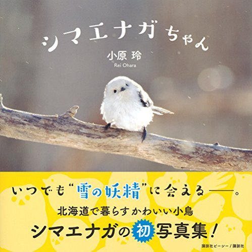 今年の鳥写真本では、小原玲さんの『シマエナガちゃん』(講談社)がとてもよかった。北海道にいる、雪でつくったおにぎりみたいなシマエナガが堪能できるのよ。 https://t.co/7zWx9gLQTC