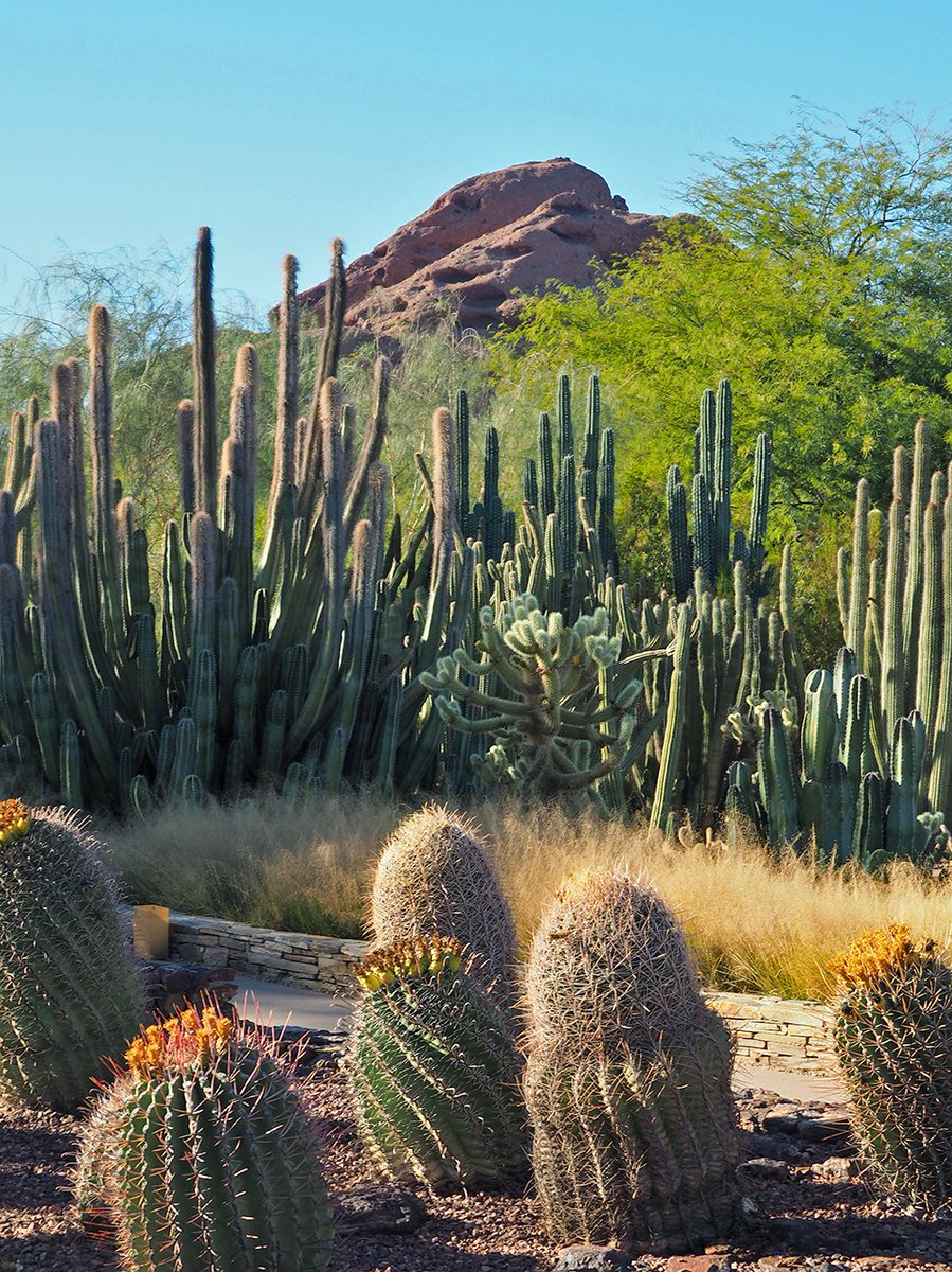 TOMORROW: It's free admission day at @dbgtweet! Explore the Desert Botanical Garden from 8 a.m.-8 p.m. https://t.co/kulr2TOykX