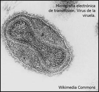 Así es el virus de la #viruela al microscopio electrónico #22ángeles https://t.co/tbvuZpQdc9