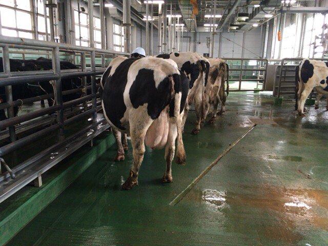 酪農は多くの別れを越えながら牛とともに歩んでいく仕事です。そんな私達の事を残酷だと 思う人もいるかもしれません。でも、この悲しみの先に人の営みや暮らしがあるのです。食べ物を大切に感謝の気持ちを忘れずにいて欲しいと願っています。 https://t.co/c3WbiRMbOG