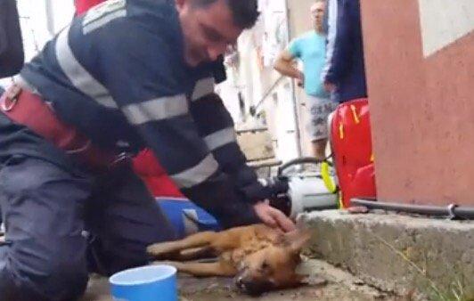 Com massagem cardíaca e respiração boca a boca, bombeiro salva cão após incêndio na Romênia https://t.co/JSZa88HZ9c