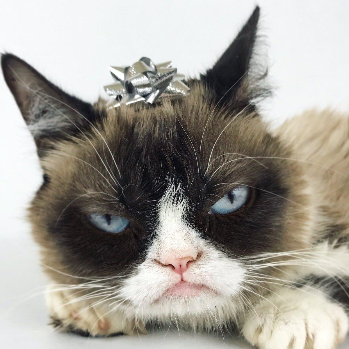Grumpy Cat (@RealGrumpyCat)