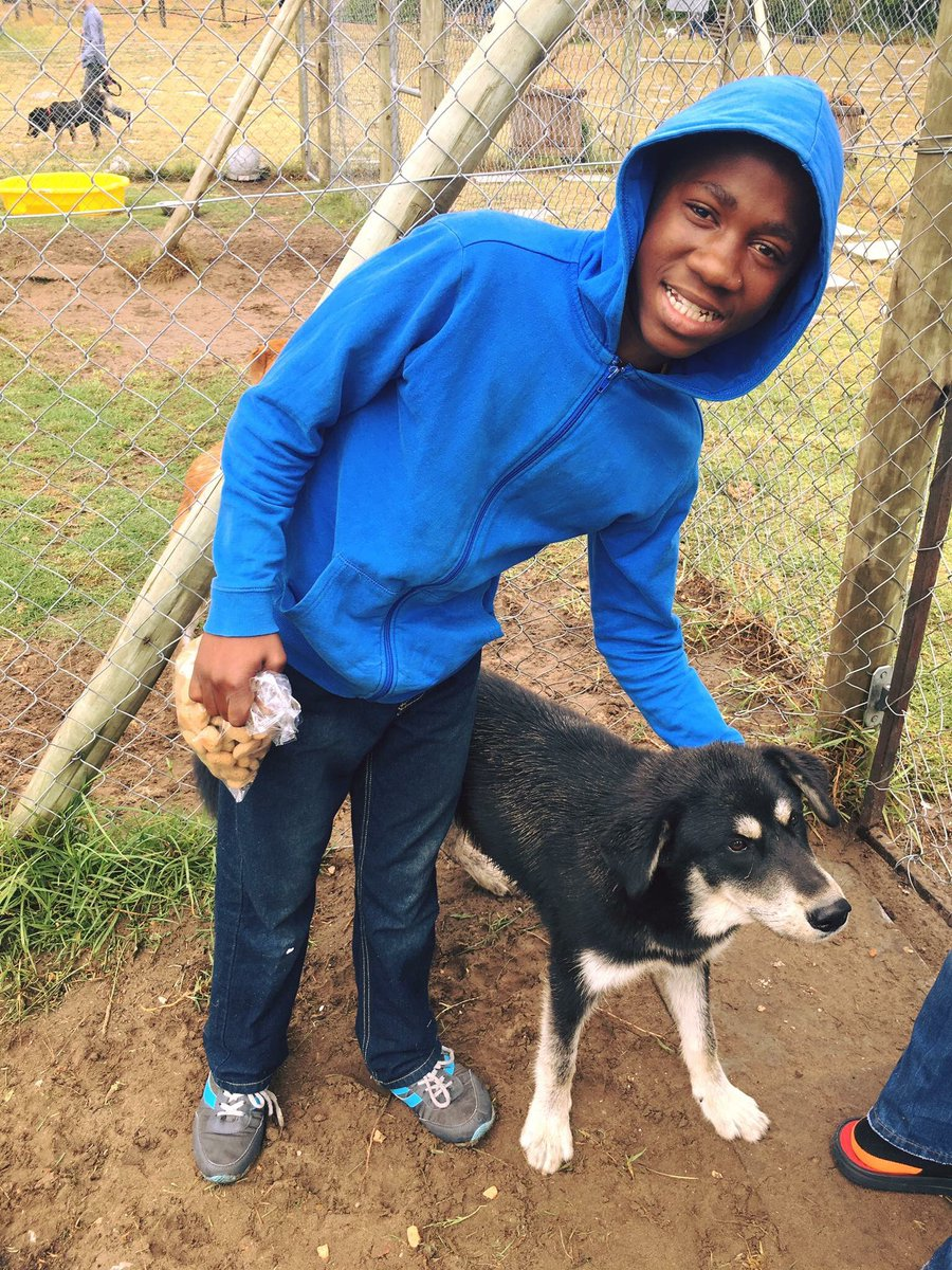 Animal Welfare Port Elizabeth Dogs For Adoption