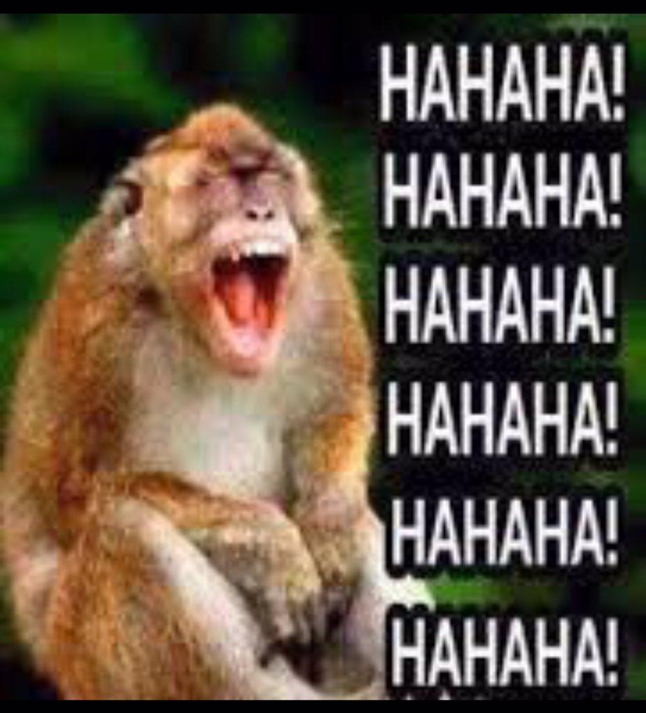 Download 93 Gambar Monyet Ketawa Ngakak Terbaru Gratis