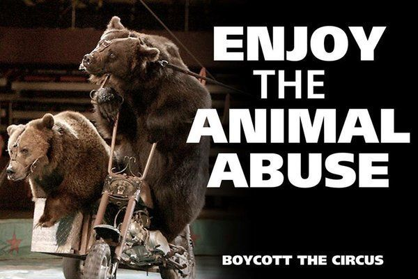 cruelty to animals in circuses essay Argumentative essay on animal cruelty animal cruelty is a relevant and shameful problem more and more people decide to pay attention to the human activity that causes harm to animals  others are captured for entertainment they have to live in zoos, cages or circuses in order to amuse people there are different types of animal cruelty.