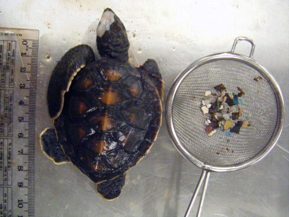 Of 34 dead baby sea turtles, 27 had plastic in their stomachs https://t.co/1uABifimTZ #pollution https://t.co/k4l7HHPWkr
