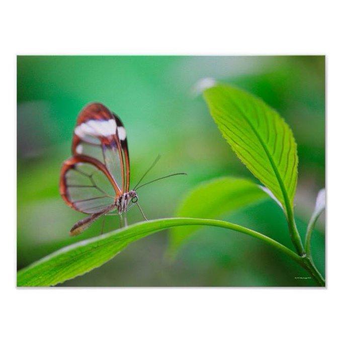Customizable #Animal, #Animal,#Themes,...