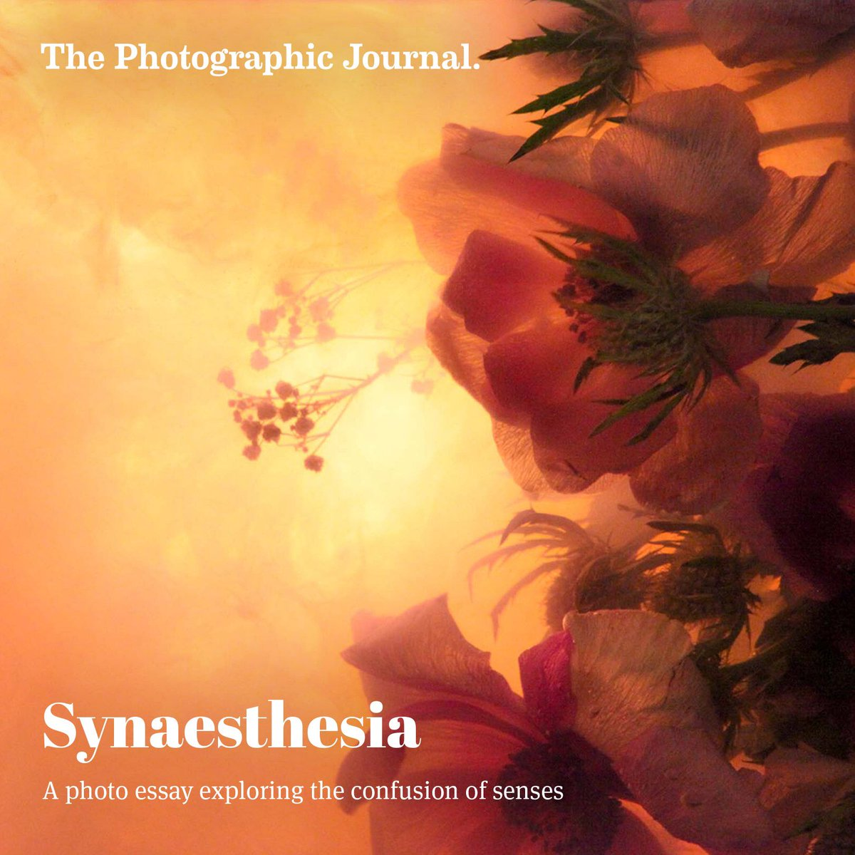 photographic journal tpj twitter take a look at our new essay from ashley garner on the site now thephotographicjournal com essays synaesthesia pic com 6qd4qj6kdi