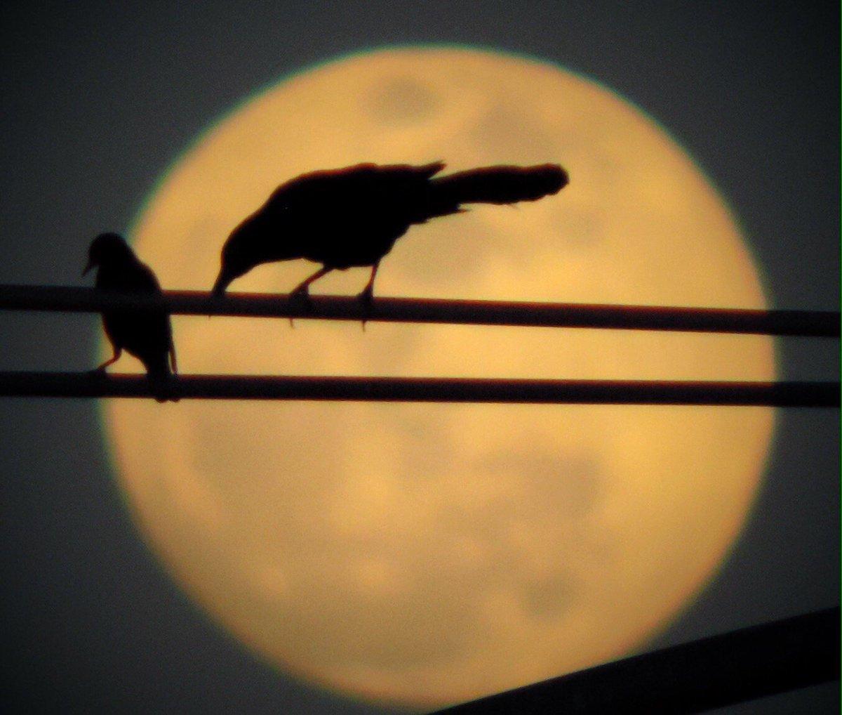 Your Take On Twitter Goodnight Birds Goodnight Moon Brad