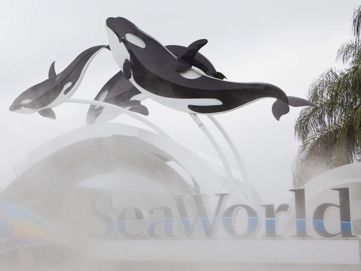 SeaWorld is opening its first park without its signature killer whales in Abu Dhabi! Read more via @businessinsider  https://t.co/woaj9Cd2UE https://t.co/7kMF4FLkhq