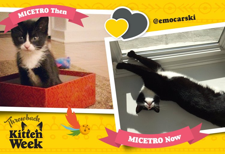 Encore, Micetro! Encore! #KittenWeek https://t.co/Nwex7mSuVN