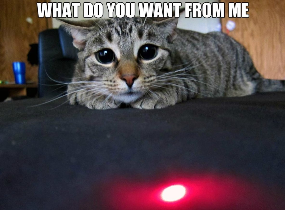 "Cute Cuddly on Twitter: ""Funny cat memes.. that red dot! #catmemes  #funnycats #cats #funnyanimals #cuteandcuddlyau… """