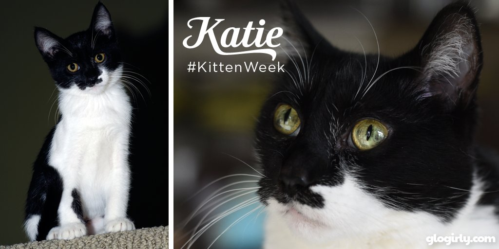 Celebrate #KittenWeek with a cat walk down memory lane & a sweet @...