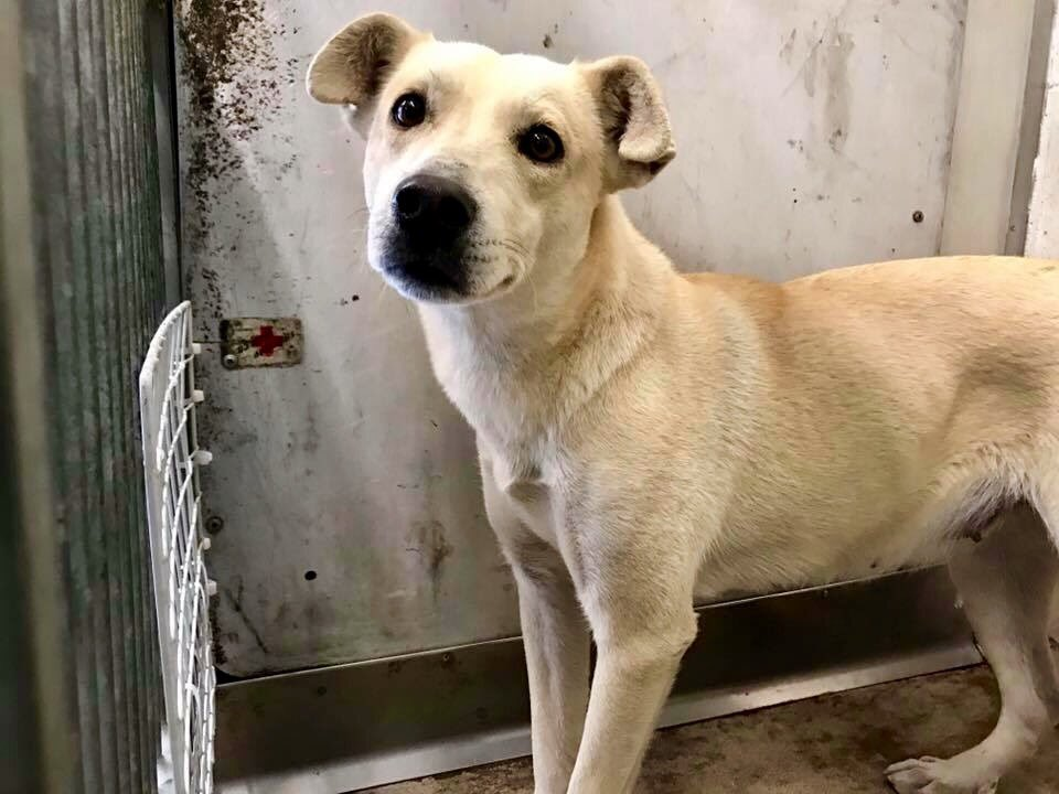 Don't forget rescue pets this Xmas. Give food, toys & bedding to your local shelter & save a life in 2017 :) #adopt https://t.co/36zIDlKbod