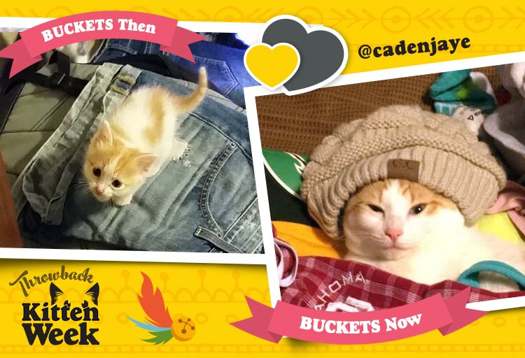 The cuteness is coming down in Buckets. #KittenWeek https://t.co/Uh1BQ...
