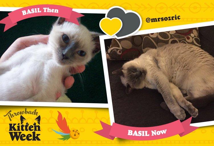 Cuteness is the spice of life. #KittenWeek https://t.co/HCzRwsT1E3