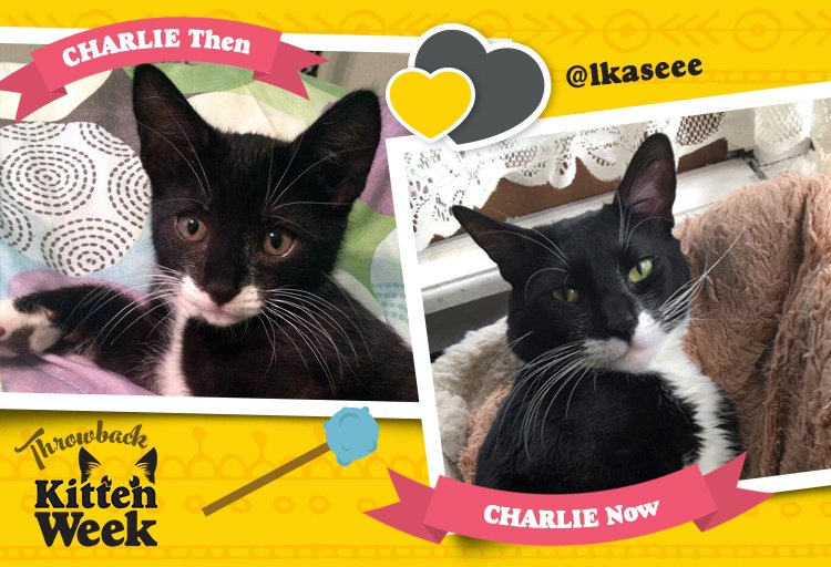 C is for Charlie, that's good enough for Tidy. #KittenWeek https://t.c...