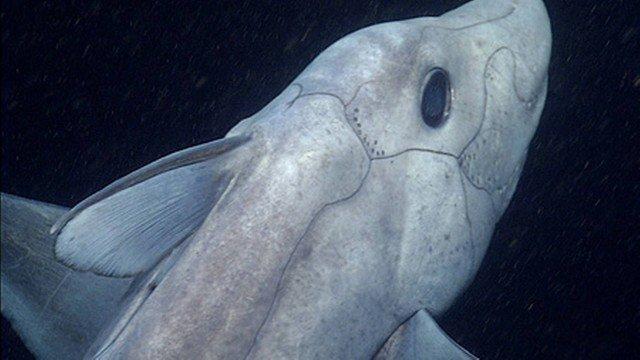 Os cientistas flagaram um tubarão fantasma, que tem um pênis na testa, pela primeira na história \o/ https://t.co/KO7P6Y13aW