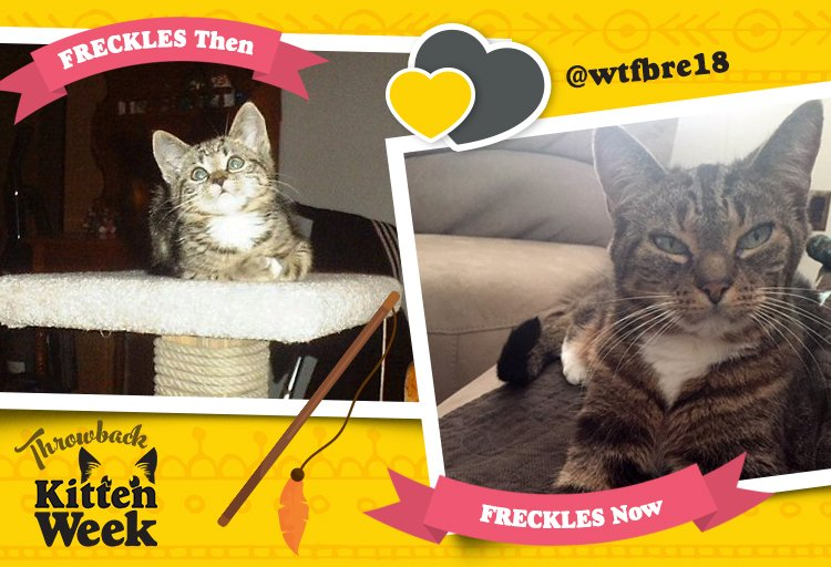 Freckles. This cat's name is Freckles. Tidy ❤️'s Freckles. #KittenWeek...