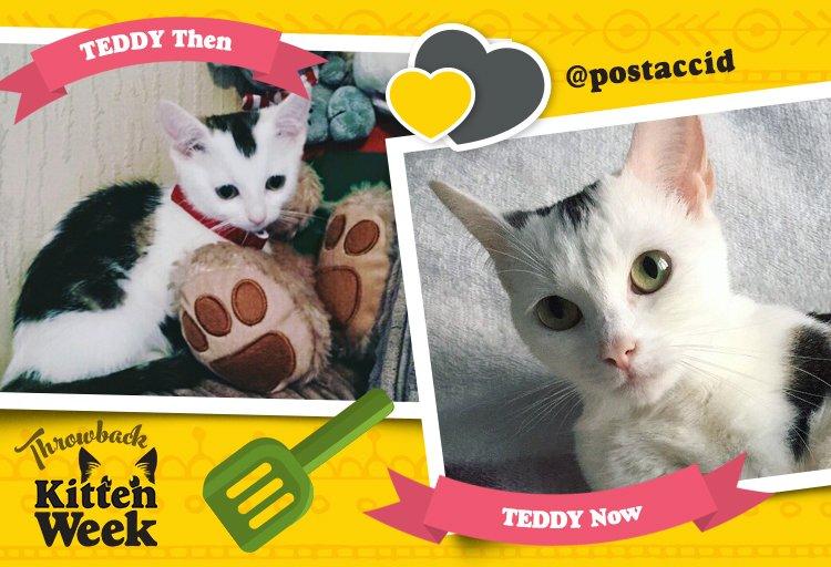 Teddy Cat > Teddy Bear. #justsayin #KittenWeek https://t.co/EVdmX68...