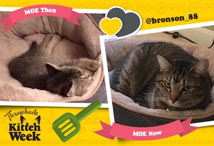 Moe cuteness, Less problems. #KittenWeek https://t.co/SRSHkz5dLn