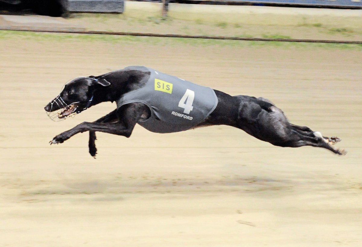 Romford dogs bettingadvice most trusted binary options brokers