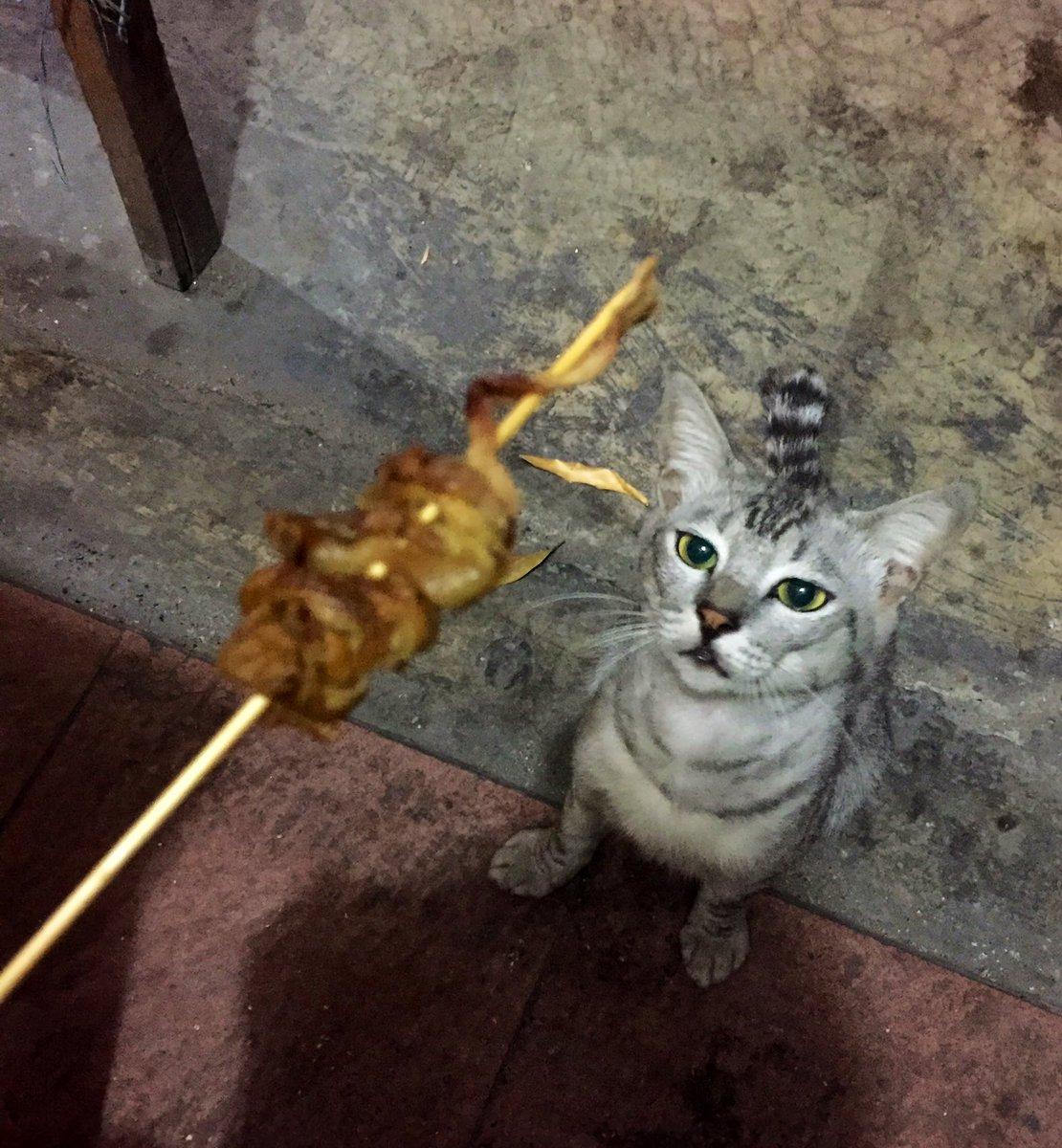 Download 95+  Gambar Kucing Bengong Paling Imut