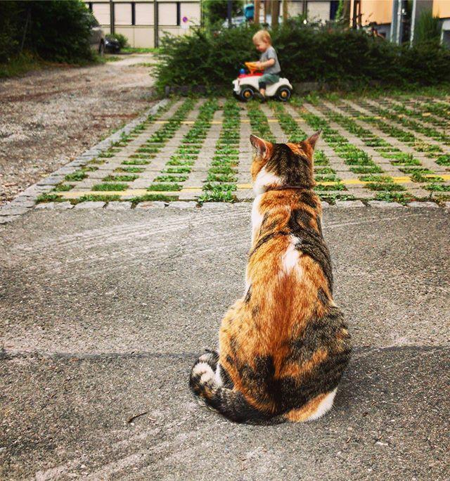 #mondaymorning #montagmorgen #monday #montag #cat #katze #catstagram #catsofinstagram #instacat #bobbycar #lifewithtoddlers #lebenmitkleinkind #momlife #mamaleben #sommer #summer #lilly https://ift.tt/32f5Hzjpic.twitter.com/O8tsUvSfo0