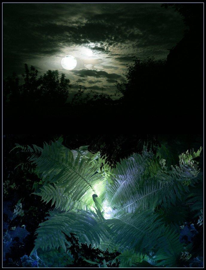 этих идей как цветет папоротник фото лесной ночью предыдущий вариант