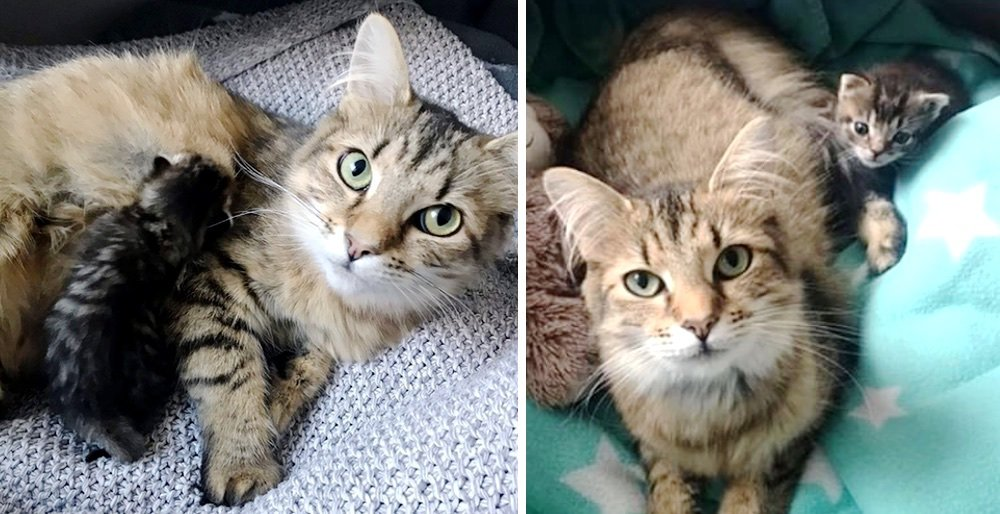 Rescuer helps cat mom raise her only kitten so they will never be apart. See full story and updates: lovemeow.com/rescuer-raise-…