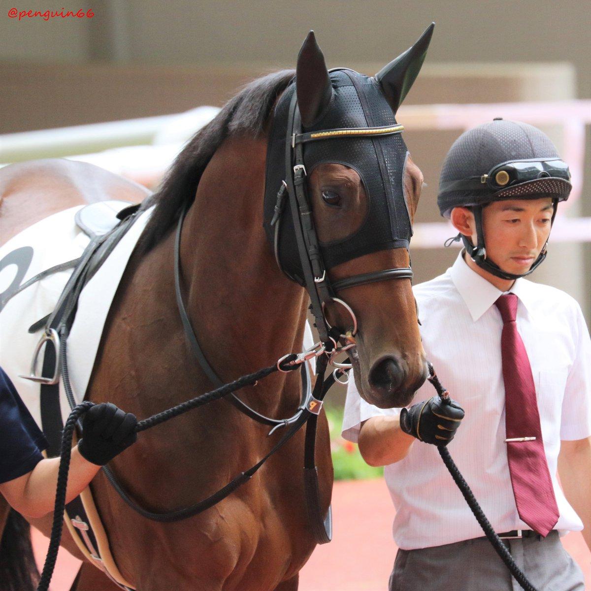 20190623阪神5R   9レッドベルジュール ディープインパクトっ仔、お母さんはレッドファンタジアさんです 勝ち馬さん   #レッドベルジュール #keiba