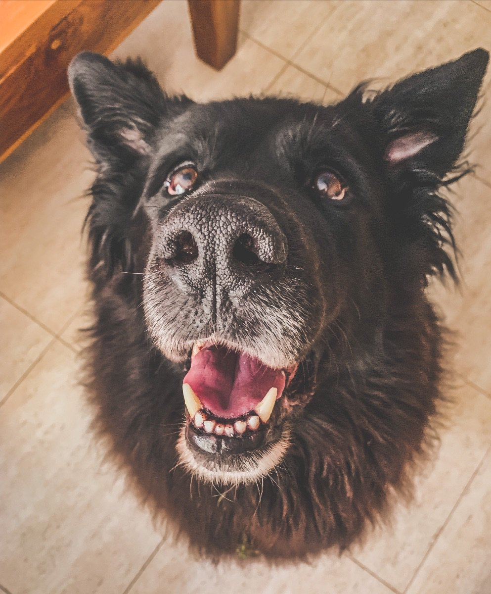 Can you👂Me Now?🐶🐾 -Words of WOOFdom-Read more HERE  https://mailchi.mp/aee9ecd17e49/can-youme-now… #communication #hear #dog #dogs  #listen #bark #timnath #windsor #foco #fortcollins #noco #loveland #bodylanguage