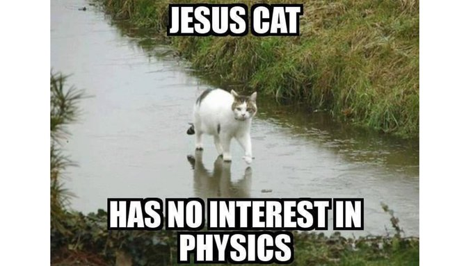 A cat meme. That's the best I can do today. https://t.co/Wxo8I1F2nS