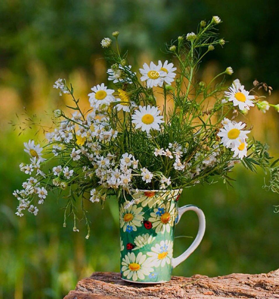 Поздравления марта, картинки с полевыми цветами доброе утро