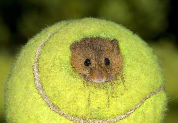 테니스공에서 사는 생물