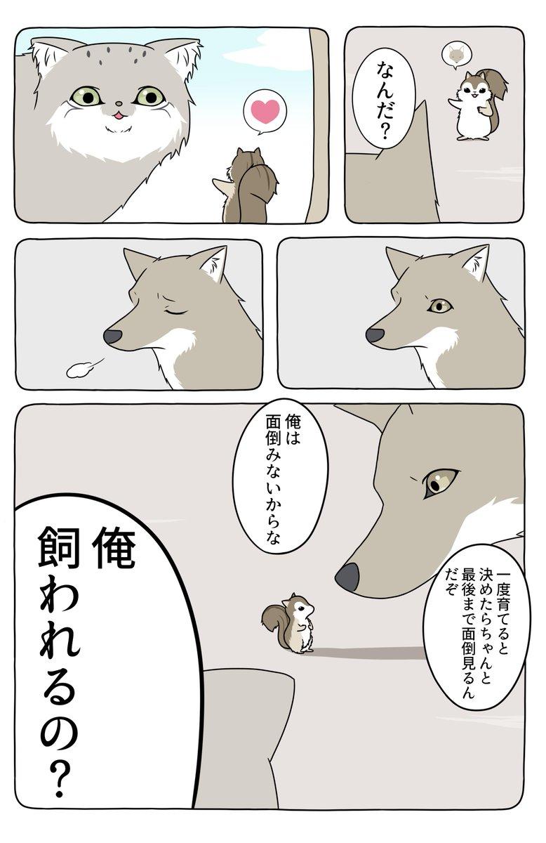 あの動物漫画にそろそろタイトルつけた方がいいんじゃないですか?